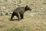 منع حیوان آزاری,اخبار علمی,خبرهای علمی,طبیعت و محیط زیست