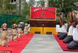 حرکات کششی افسران هندی و سگ های تعلیمی در جلسه یوگا,اخبار جالب,خبرهای جالب,خواندنی ها و دیدنی ها
