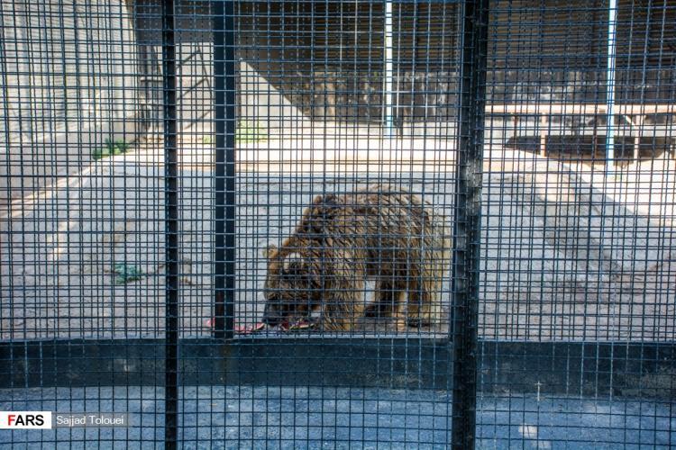 تصاویر باغ وحش صفادشت,عکس های باغ وحش صفادشت,تصاویر باغ وحش صفادشت در ملارد