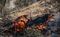 تصاویر آتش سوزی در کوهمرهسرخی,عکس های آتش سوزی در کوهمرهسرخی, تصاویر مهار آتش سوزی در کوهمرهسرخی شیراز