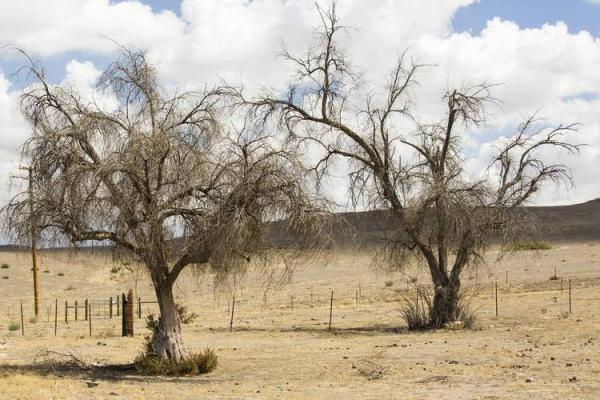 تغییرات اقلیمی,اخبار علمی,خبرهای علمی,طبیعت و محیط زیست