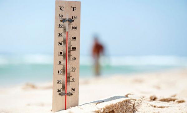 تلفات گرمای هلند,اخبار حوادث,خبرهای حوادث,حوادث طبیعی