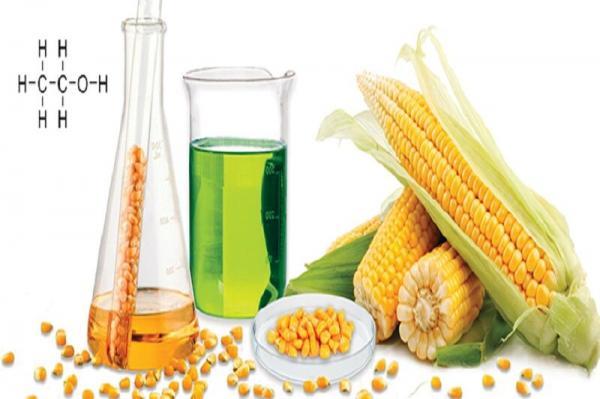 بنزین با طعم گیاهان,اخبار علمی,خبرهای علمی,طبیعت و محیط زیست