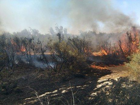 آتشسوزی تالاب هامون,اخبار اجتماعی,خبرهای اجتماعی,محیط زیست