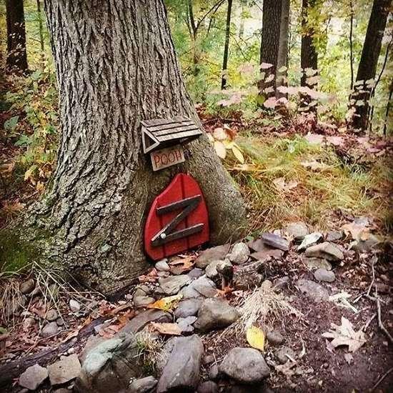اشیاء شگفت انگیز جنگل ها,اخبار جالب,خبرهای جالب,خواندنی ها و دیدنی ها