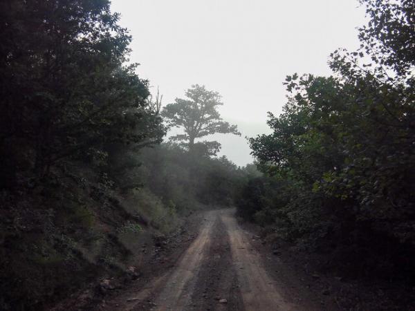جنگلهای شمال,اخبار اجتماعی,خبرهای اجتماعی,محیط زیست