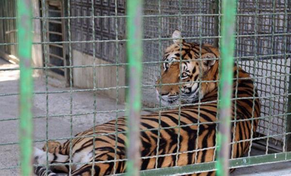 باغ وحش مشهد,اخبار اجتماعی,خبرهای اجتماعی,محیط زیست