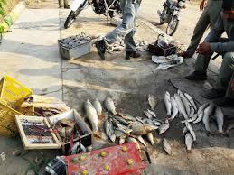 صید غیرمجاز ماهی,اخبار اجتماعی,خبرهای اجتماعی,حقوقی انتظامی