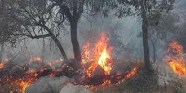 آتش سوزی در جنگل های ارسباران,اخبار اجتماعی,خبرهای اجتماعی,محیط زیست