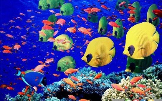 خطر بیماریهای انگلی در ماهیان آکواریومی
