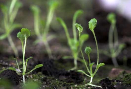 محافظت از گیاهان,اخبار علمی,خبرهای علمی,طبیعت و محیط زیست