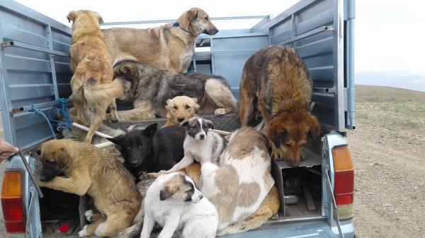 توضیحات شهرداری تهران در مورد کشتار سگها با آمپول اسید