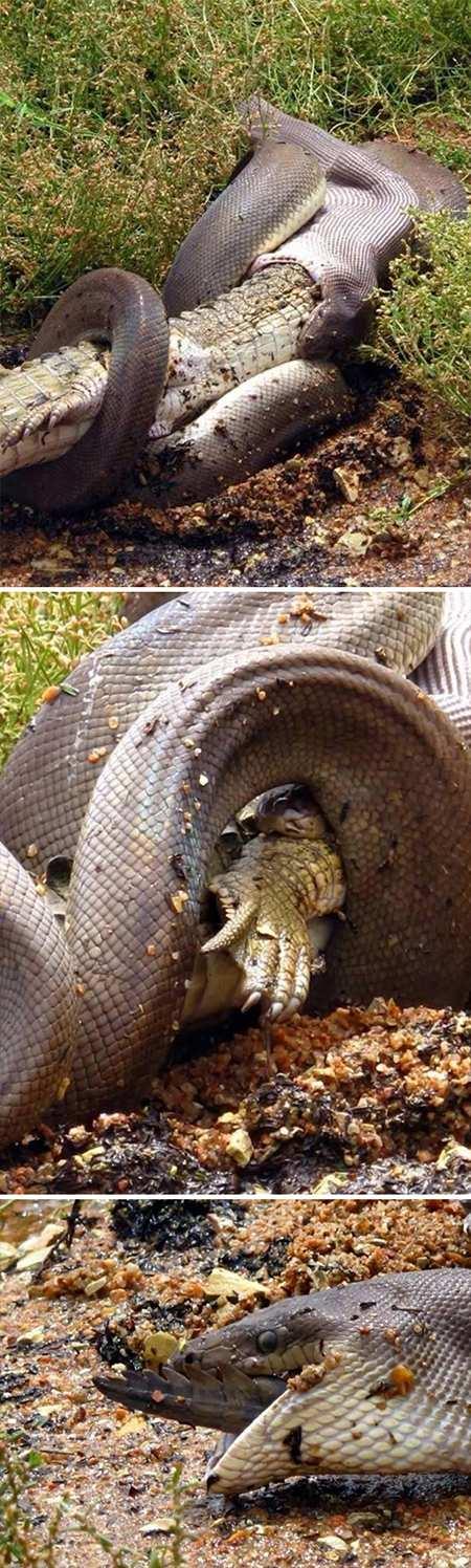 موجودات عجیب و ترسناک در استرالیا,اخبار جالب,خبرهای جالب,خواندنی ها و دیدنی ها