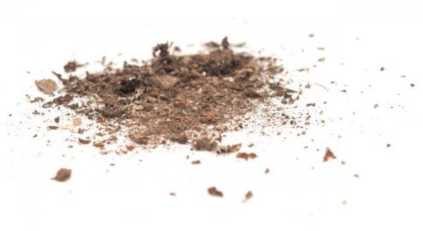میکروبهای خاک,اخبار علمی,خبرهای علمی,طبیعت و محیط زیست