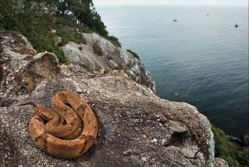 جزیره مارها,اخبار جالب,خبرهای جالب,خواندنی ها و دیدنی ها