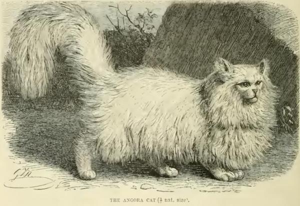 گربه ایرانی,اخبار اجتماعی,خبرهای اجتماعی,محیط زیست
