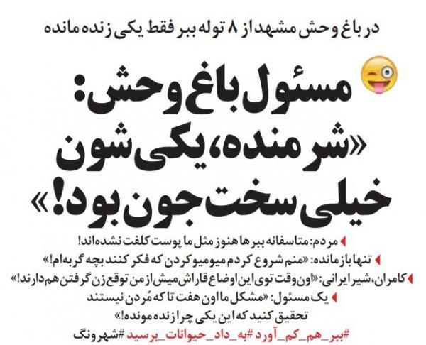کشته شدن توله ببرها در باغ وحش مشهد,طنز,مطالب طنز,طنز جدید