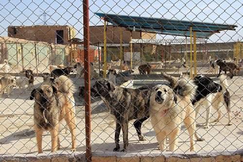 سگ کشی در کهریزک,اخبار اجتماعی,خبرهای اجتماعی,شهر و روستا