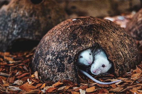 تصاویر دنیای حیوانات در سال ۲۰۱۹,عکس های دنیای حیوانات در سال ۲۰۱۹,تصاویر دنیای حیوانات