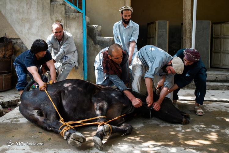 تصاویر عید قربان در جهان,عکس های دیدنی در ایام عید قربان,تصاویرعید الاضحی