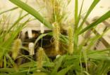 فتوسنتز گیاهان,اخبار علمی,خبرهای علمی,طبیعت و محیط زیست