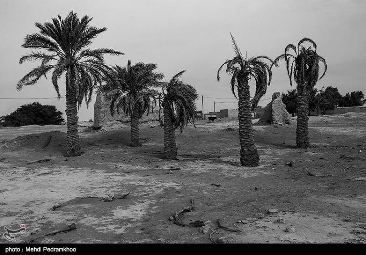تصاویر وضعیت زندگی غیزانیه,عکس های وضعیت زندگی غیزانیه,تصاویر بزرگ ترین شرکت های نفتی در غیزانیه