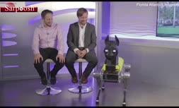 فیلم/ انجام سفارشات شما با سگ رباتیک