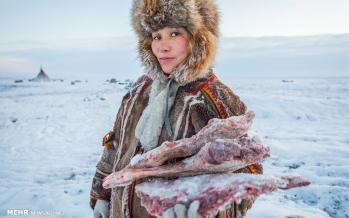 تصاویر زندگی در سرزمین های قطبی روسیه,عکس های زندگی در سرزمین های قطبی روسیه,تصاویر ساکنان سرزمین های قطبی