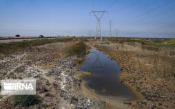 تصاویر تالاب شادگان,عکس های تالاب شادگان در استان خوزستان,تصاویر وضعیت تالاب شادگان