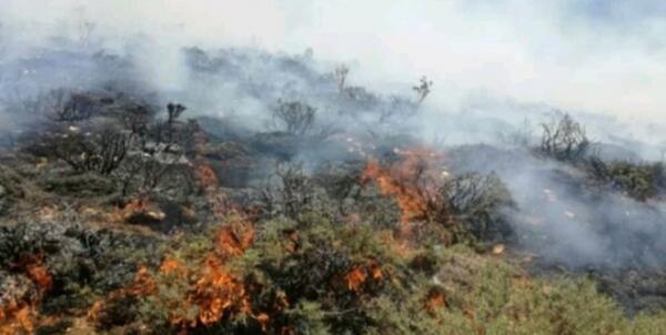 آتشسوزی گسترده گاوازنگ,اخبار اجتماعی,خبرهای اجتماعی,محیط زیست