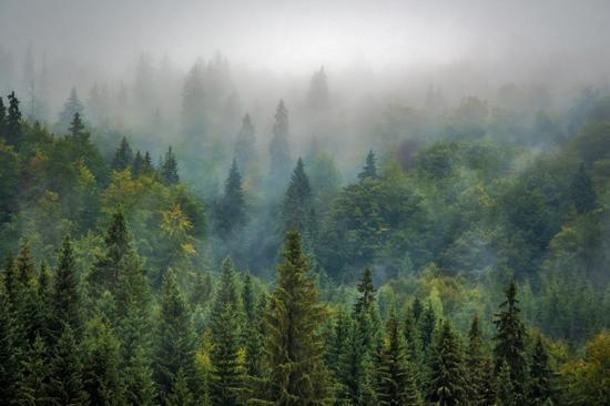 مشکلات محیط زیستی,اخبار جالب,خبرهای جالب,خواندنی ها و دیدنی ها