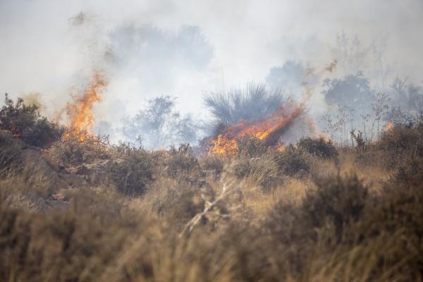 آتش سوزی اراضی ملی در قزوین,اخبار اجتماعی,خبرهای اجتماعی,محیط زیست