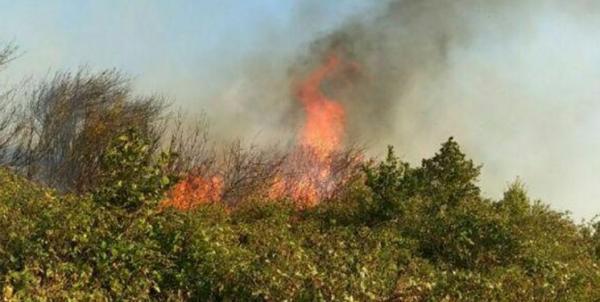 آتشسوزی جنگلها,اخبار اجتماعی,خبرهای اجتماعی,محیط زیست