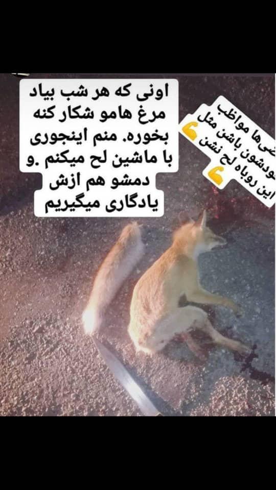 نیروزی انتظامی ایران,اخبار حوادث,خبرهای حوادث,جرم و جنایت