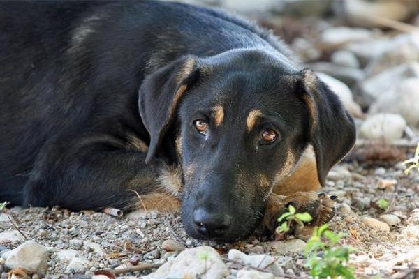 سگ اهلی,اخبار پزشکی,خبرهای پزشکی,بهداشت