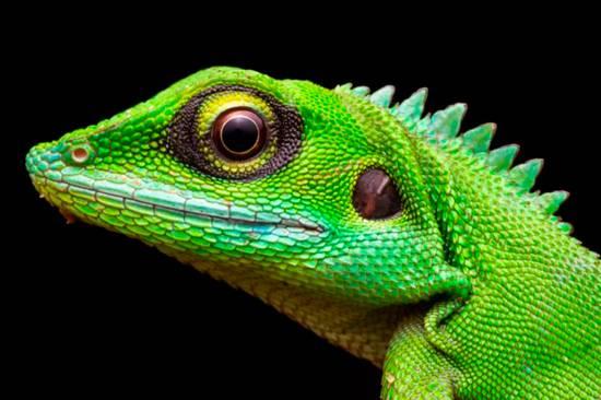 حیات وحش,اخبار جالب,خبرهای جالب,خواندنی ها و دیدنی ها