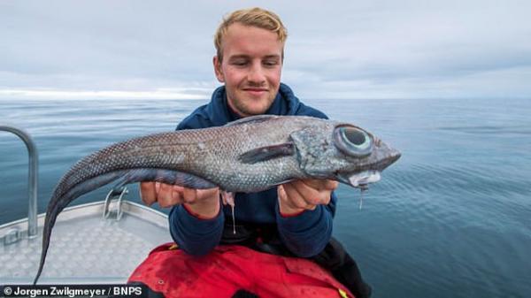 صید یک جانور عجیب از اعماق دریاها,اخبار جالب,خبرهای جالب,خواندنی ها و دیدنی ها