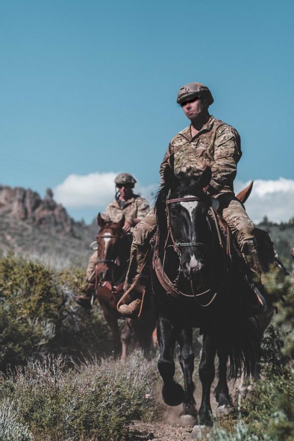 حیوانات نظامی,اخبار جالب,خبرهای جالب,خواندنی ها و دیدنی ها
