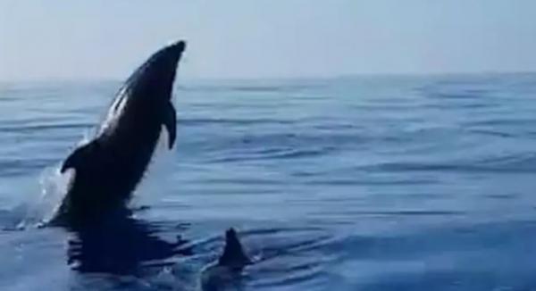 تشکر زیبای یک دلفین از ماهیگیران,اخبار جالب,خبرهای جالب,خواندنی ها و دیدنی ها