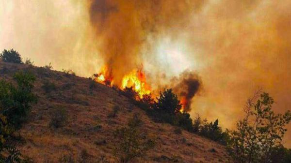 آتش سوزی جنگل های ارسباران,اخبار اجتماعی,خبرهای اجتماعی,محیط زیست