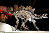 کشف گونه عجیب از قدیمی ترین یک نوع دایناسور,اخبار علمی,خبرهای علمی,طبیعت و محیط زیست