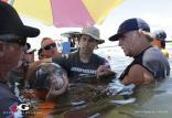 دلفینهای وحشی,اخبار علمی,خبرهای علمی,طبیعت و محیط زیست