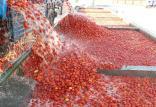 قیمت گوجهفرنگی,اخبار اقتصادی,خبرهای اقتصادی,اصناف و قیمت