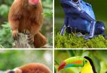 خسارات آتش سوزی جنگل آمازون,اخبار جالب,خبرهای جالب,خواندنی ها و دیدنی ها