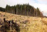 جنگل ها,اخبار علمی,خبرهای علمی,طبیعت و محیط زیست