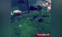 فیلم منتشر شده از داخل باغ وحش و ویلای اشرافی حسن رعیت