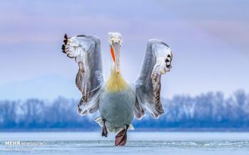تصاویر برندگان مسابقه عکاسی پرندگان,عکس های مسابقه عکاسی پرندگان,تصاویر برترین های مسابقه عکاسی 2019