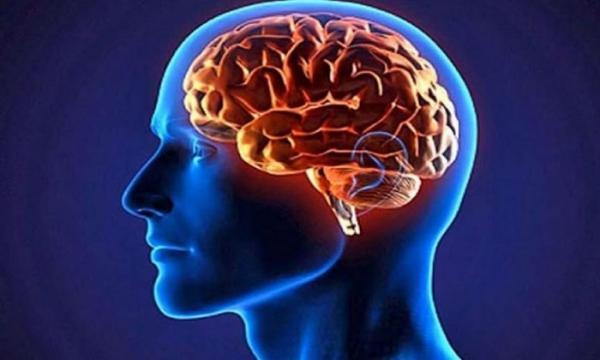چربيهاي ضروري براي مغز,اخبار پزشكي,خبرهاي پزشكي,مشاوره پزشكي