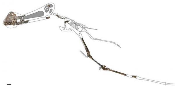 کشف فسیل خزنده پرنده در استرالیا,اخبار علمی,خبرهای علمی,طبیعت و محیط زیست