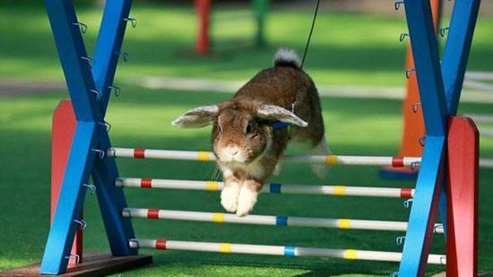 دانستنی هایی در مورد خرگوشها,اخبار جالب,خبرهای جالب,خواندنی ها و دیدنی ها